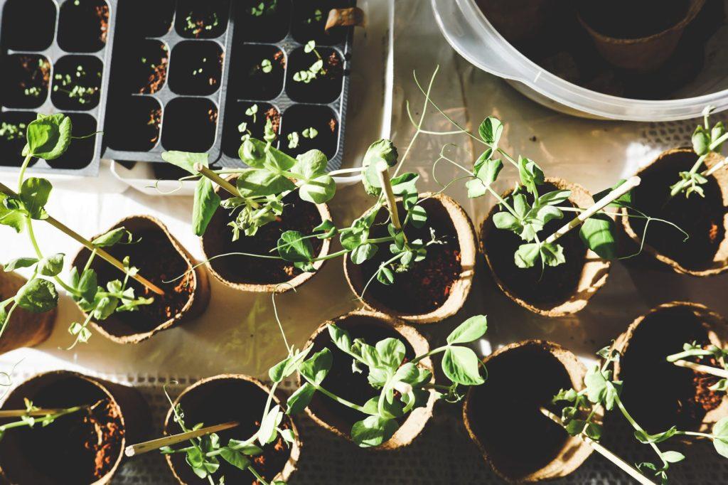 piante per il balcone